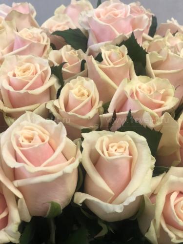 Роза кремовая №475