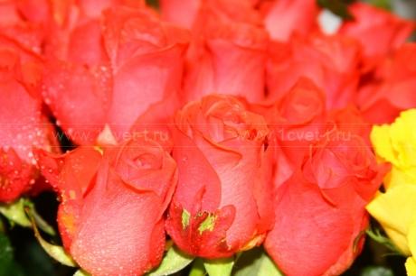 Красные розы №478