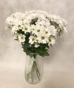 Букет из белой кустовой хризантемы №812