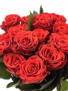 Роза красная №882