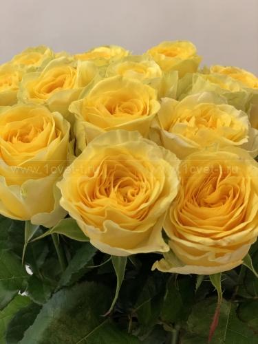 Роза жёлтая №883