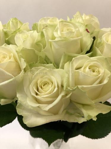 Роза белая №887