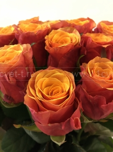 Роза красно-оранжевая №888