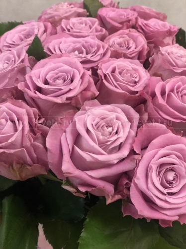 Роза сиреневая №889