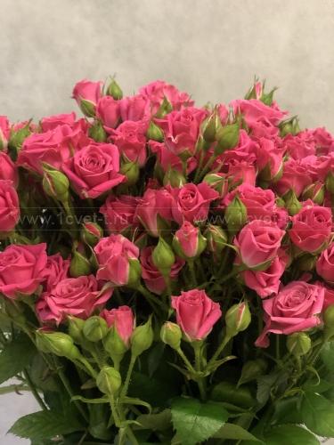 Роза кустовая 80 см