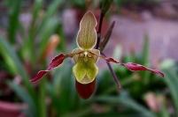 Если вам подарили орхидею